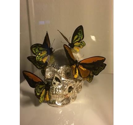 Philippe PASQUA, papillons colorés